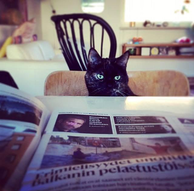 Kissa lukemassa lehteä